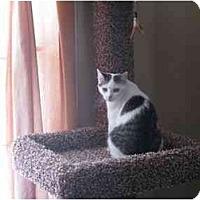 Adopt A Pet :: Cady - Manalapan, NJ