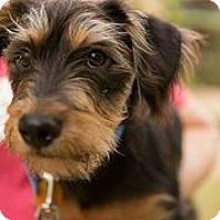 Adopt A Pet :: DJ Jazzy Jeff - Austin, TX