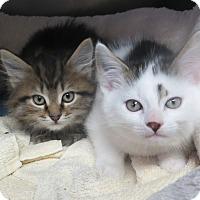 Adopt A Pet :: Cooper & Finn - Brockton, MA