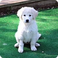 Adopt A Pet :: Taboo - Austin, TX