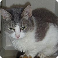 Adopt A Pet :: Amberleigh - Hamburg, NY