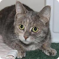 Adopt A Pet :: Fluffy - Caistor Centre, ON