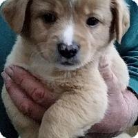 Adopt A Pet :: Bertram - Gainesville, FL
