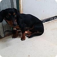 Adopt A Pet :: Buddy - Lubbock, TX