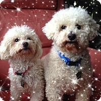 Adopt A Pet :: Adopted!Spunky & Sydney - KY - Tulsa, OK