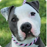 Adopt A Pet :: SHAE - Red Bluff, CA