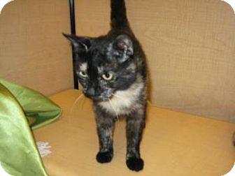 Domestic Shorthair Cat for adoption in Bulverde, Texas - Mama Cat