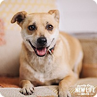 Adopt A Pet :: Aubrey - Portland, OR