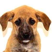 Adopt A Pet :: Bucky - Glastonbury, CT
