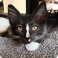 Adopt A Pet :: Spring - Orange, CA