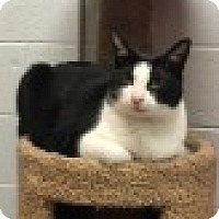 Adopt A Pet :: Coolidge - Manchester, CT