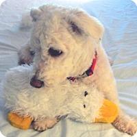 Adopt A Pet :: Princess - Suffolk, VA