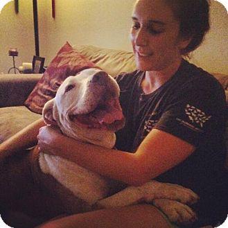 American Pit Bull Terrier/American Bulldog Mix Dog for adoption in Orange, California - Lucius