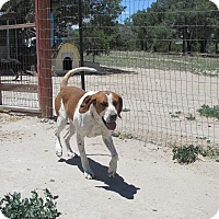 Adopt A Pet :: Clyde - Pie Town, NM