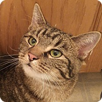 Adopt A Pet :: Emmie - Midvale, UT