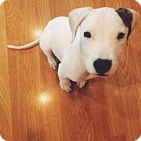 Adopt A Pet :: Rhett D3382 - Shakopee, MN