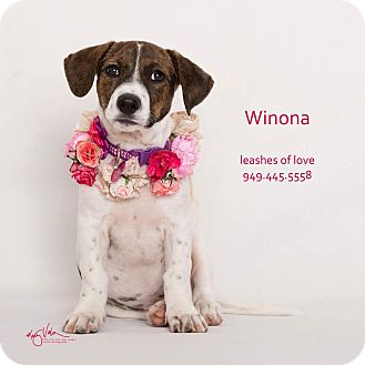Basset Hound Mix Puppy for adoption in Lake Forest, California - Winona