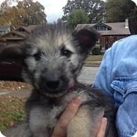 Adopt A Pet :: Kukla - Memphis, TN