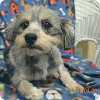 Adopt A Pet :: Big Man Adopted - Brattleboro, VT