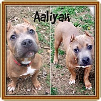 Adopt A Pet :: AALIYAH - HAGGERSTOWN, MD