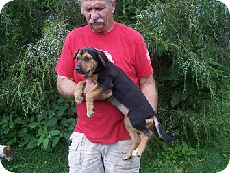 Anatolian Shepherd Mix Puppy for adoption in Germantown, Maryland - Yolanda