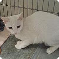 Adopt A Pet :: Wintergreen - Tucson, AZ