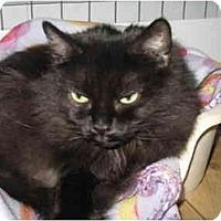 Adopt A Pet :: Kookie - Mission, BC