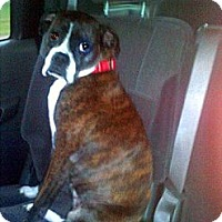 Adopt A Pet :: Rosie Marie - Dayton, OH