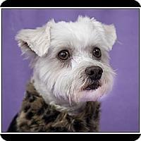 Adopt A Pet :: Miranda - Fort Braff, CA