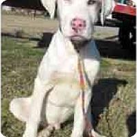 Adopt A Pet :: Axle Rose - Richmond, VA