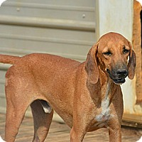 Hound (Unknown Type) Mix Dog for adoption in Grenada, Mississippi - Randy