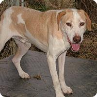 Adopt A Pet :: Coco - Savannah, MO