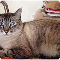 Siamese Cat for adoption in Los Angeles, California - Dinky