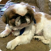 Adopt A Pet :: Elvis-NY - Mays Landing, NJ