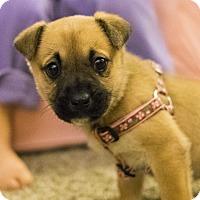 Adopt A Pet :: Deb - Toledo, OH