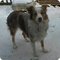 Adopt A Pet :: Brutus - Delaware, OH