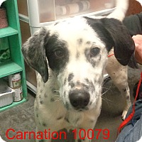 Adopt A Pet :: Carnation - baltimore, MD