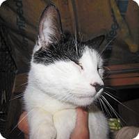 Adopt A Pet :: Rocky - N. Berwick, ME