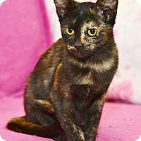 Adopt A Pet :: Calli-Ally - Davis, CA