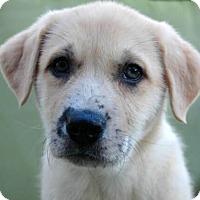 Adopt A Pet :: Cecelia - Austin, TX