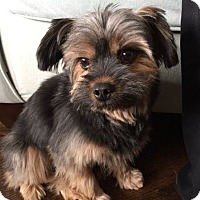 Adopt A Pet :: Mazzy - Mississauga, ON