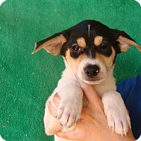 Adopt A Pet :: Kato - Oviedo, FL