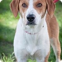 Adopt A Pet :: Barry - Gainesville, FL