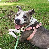 Adopt A Pet :: Kia - Acushnet, MA