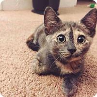 Adopt A Pet :: Petal - Gainesville, FL
