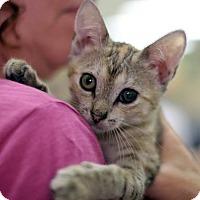 Adopt A Pet :: Quin - New York, NY