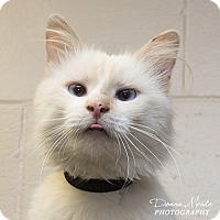 Adopt A Pet :: Clarence - Troy, OH