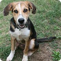 Adopt A Pet :: Speck - Lufkin, TX