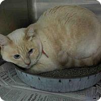 Adopt A Pet :: LEILA - Temple, TX