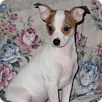 Adopt A Pet :: Rotor - Aiken, SC